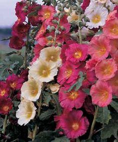 Perennial Plants for Hummingbirds