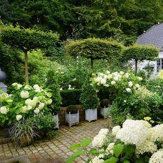 Form og struktur. De paraplyformede avnbøgtræer har jeg fået hjem fra Holland #blomster #flowers #garden #have #clausdalby