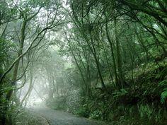 Hoy estamos de enhorabuena: La Gomera declarada Reserva Mundial de la Biosfera. Como homenaje, nuestro bosque milenario...