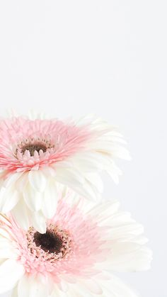 Pretty Wallpapers Iphone 6 Plus Desktop Background Nature, Nature Iphone Wallpaper, Flower Phone Wallpaper, Pink Daisy Wallpaper, Iphone 6 Plus Wallpaper, Trendy Wallpaper, Pretty Wallpapers, New Wallpaper, Floral Wallpapers