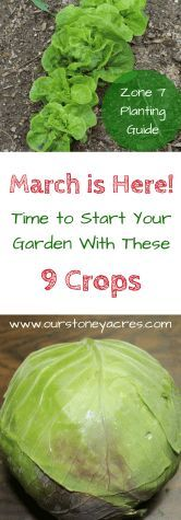 Planting Guide for Zone 7 March Planting Guide for Zone Learn what 9 crops you can planting in your garden during the month of March! March Planting Guide for Zone Learn what 9 crops you can planting in your garden during the month of March! Vegetable Planting Guide, Backyard Vegetable Gardens, Planting Vegetables, Organic Vegetables, Garden Landscaping, Garden Plants, Zone 9 Gardening, Organic Gardening, Gardening Supplies