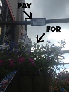 Life After Empty Nest: D.I.Y. Hanging Flower Baskets