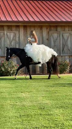 Funny Horse Videos, Funny Horses, Cute Horses, Pretty Horses, Horse Love, Funny Animal Videos, Cute Wild Animals, Cute Funny Animals, Animals And Pets