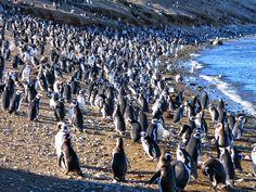 Los Pingüinos Natural Monument (Punta Arenas - Chile)