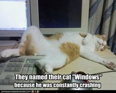 """They named their cat """"Windows"""""""
