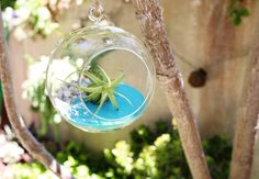 Succulents Part 2: Creative Ideas and Tips for Decorating with Succulents - ProFlowers Blog