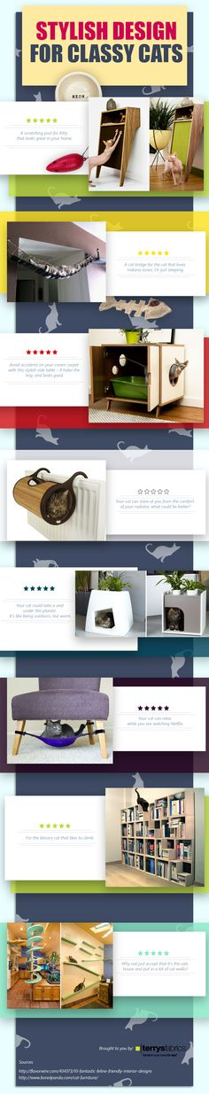 Stylish Designs for Classy Cats #Infographic #Cats #Design