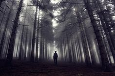 Foggy forest - Sinan Cansız
