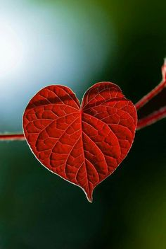 I like how it is two things at one time, it is a leaf of nature but it is also a red heart.