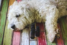 Essential oils for dogs - different needs, different oils.  Avoid: camphor, clove, thyme, cassia, wintergreen, geranium, and oregano.