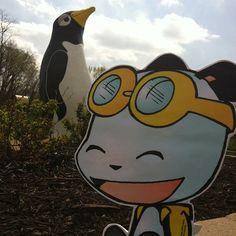 PandaOki at Penguin Park! @penguinpark #adventures #ComicGate #kids #family #childrensbooks #art #books #anime #fun #exercise #read #bookclub #MustRead #reading #authors #pandas #pandaoki #comics #KansasCity  #outside #unplug #penguins #parks