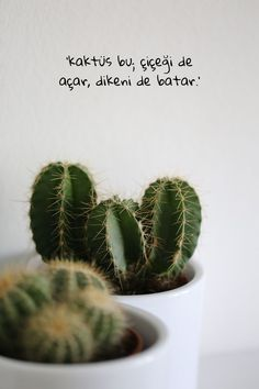 Agar, Home Pictures, English Quotes, I Don T Know, Cactus Plants, Cool Words, Karma, Pictures, Cactus