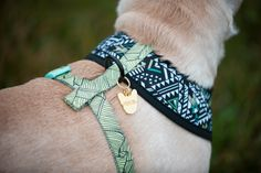 Frenchie ID Tag from FRENCHIE BULLDOG