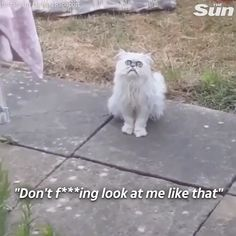 Funny Original With Sound - Funny Animals - Katzen Animal Jokes, Funny Animal Memes, Funny Animal Videos, Cute Funny Animals, Funny Animal Pictures, Cat Memes, Funny Photos, Funny Dogs, Cute Cats