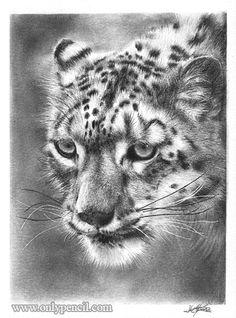 http://www.onlypencil.com/wp-content/uploads/2007/08/snow_leopard_final.jpg