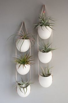 Your imagination can go wild and eccentric when it comes to air plant display ideas; these plants are highly versatile and easy to keep! Hanging Air Plants, Hanging Planters, Indoor Plants, Planter Pots, Succulent Planters, Indoor Herbs, Ceramic Planters, Hanging Terrarium, Hanging Baskets