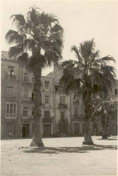 Las palmeras de la Plaza de los Carros.