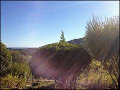 Giardini mediterranei baciati dal sole, come il mio Allau