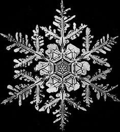 "I love fractals. The idea of fractals. Fractals in nature. For those of you who don't know what a fractal is, it is ""a rough or fragmente. Fractals In Nature, Snowflake Bentley, Snowflake Photos, Real Snowflakes, Snowflake Snowflake, Snow Flake Tattoo, Ice Crystals, Snow And Ice, All Nature"