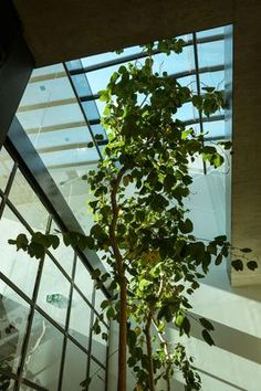 Neue Homebase — Kramer and kramer Plants, Design, Partition Screen, Places, Architecture, Nice Asses, Plant, Planets