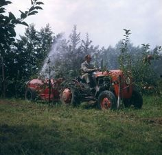 Fruitteelt. Tuinder op een rode tractor, bezig met het bespuiten van zijn appelboomgaard. Betuwe, Nederland, jaartal onbekend.