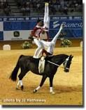 equestrian vaulting - Google Search