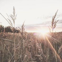 Beautiful November <3 November 3, Hello Autumn, Instagram Accounts, Photo And Video, Outdoor, Beautiful, Products, Outdoors, Outdoor Games