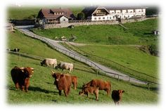 Hike up to beautiful alpine pasture and have lunch on the terrace. Hike to Windlegern possible Farm animals at the top. Horse riding available. Horse Riding, Farm Animals, Austria, Terrace, Hiking, Lunch, Camping, Horses, Summer