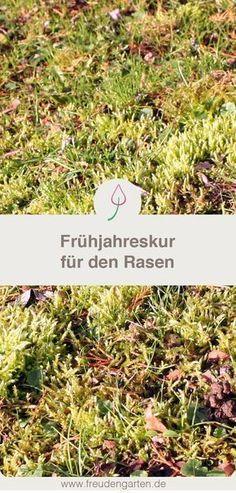 So wird dein Rasen wieder schön: Tipps zum Pflegen im Frühjahr #Rasen #Rasenpflege #Garten #Gartentipp
