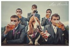 How Bassets Do Weddings!! This is our Basset Hound, Meatloaf - rocking a matching suit to the groomsmen, drinking a dog beer, caught on camera by the amazing Lissa Alexandra: http://www.lissaalexandraphotography.com/