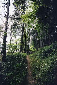 elenamorelli:{ tall trees, green grass }