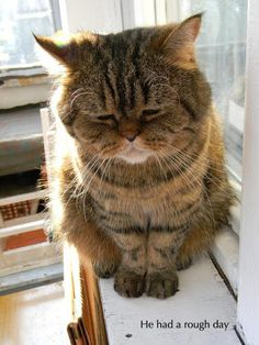 Funny Animal Pictures Of The Day - 26 Pics - sad cat - red dot Funny Animals With Captions, Funny Captions, Funny Animal Pictures, Animal Captions, Hilarious Animals, Animal Pics, Funny Photos, Zoo Animals, Animals And Pets