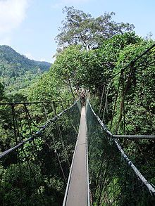 Taman Negara Rainforest, Malaysia  World's longest canopy walk. My pictures aren't digital, but it's awesome to see pictures online.