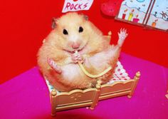 In Bed with Pasta ~ Migotka  (fat hamsters are disturbingly cute, esp. with tiny furniture & noodle))