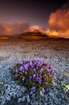 //Cotopaxi Sunset Cotopaxi National Park, Ecuador, by fernandosalas, on 500px.#places #photography
