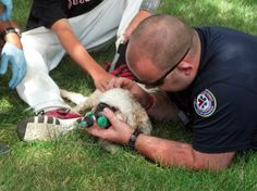 On Saturday the Indianapolis Fire Department was recognized for their efforts to save the lives of animals.  Go, IFD!!!