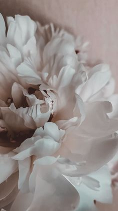 , The Effective Pictures We Offer You About spring flowers new zealand A quality picture can tell yo Flower Phone Wallpaper, Iphone Background Wallpaper, Aesthetic Iphone Wallpaper, Nature Wallpaper, Aesthetic Wallpapers, Spring Flowers Wallpaper, Apple Wallpaper, Wallpaper Desktop, Photo Deco