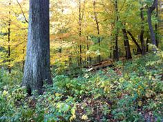 Photo by Steve Berardi   Tips for photographing Fall colors