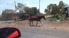 Animales sueltos en la ruta I