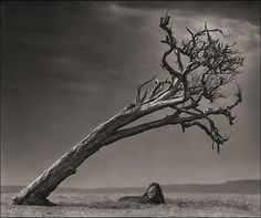 Conserving Africa's Wildlife Through Photography - The magnificently breathtaking photographs of Nick Brandt