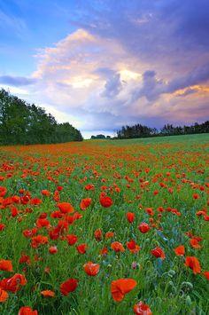 Poppies make my heart smile Beautiful Nature Pictures, Beautiful Landscapes, Beautiful World, Beautiful Flowers, Landscape Art, Landscape Paintings, Landscape Photography, Nature Photography, Meadow Flowers