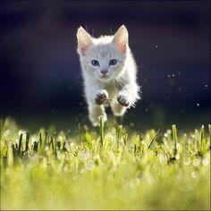 Levitating cat trick.