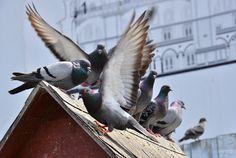 Birds - https://www.youtube.com/watch?v=w_SQzJzUzS0 https://soundcloud.com/oc0404/my-love Thanks to everyone