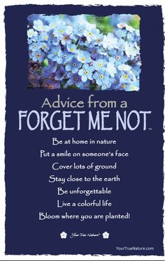 "Growth Advice from a Forget Me Not: ""Bloom where you are planted!"" Your True Nature"