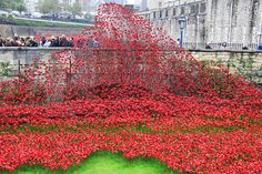 Public Art | Tower of London Poppies Complete, Artists to be recognized by Queen