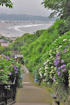 Bike riding in Kamakura - Joujyuin Temple, Kamakura, Japan 鎌倉 成就院のアジサイ Aesthetic Japan, Nature Aesthetic, City Aesthetic, Beautiful World, Beautiful Places, Japan Landscape, Kamakura, Scenery Wallpaper, Parcs
