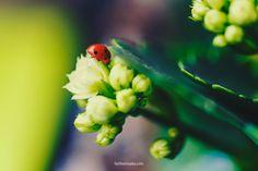 Little Miss Ladybug (FaithieImages) Little Miss, Ladybug, Child, Nature, Flowers, Image, Boys, Naturaleza, Kid