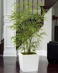 Decorating with artificial bamboo