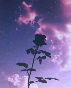 defaultr-b - 0 results for purple aesthetic Violet Aesthetic, Dark Purple Aesthetic, Lavender Aesthetic, Sky Aesthetic, Aesthetic Colors, Aesthetic Collage, Aesthetic Pictures, Purple Aesthetic Background, Aesthetic Roses