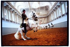 For 450 years the Lipizzaner stallions have been performing for audiences at the Spanish Riding School in Vienna.